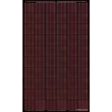 BISOL SPECTRUM BMU-250 Zonnepanelen rood