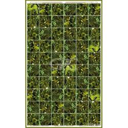 BISOL SPECTRUM BMU-250 Zonnepanelen groen